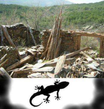 LA HISTORIA DE LA LAGARTIJA O SALAMANQUESA